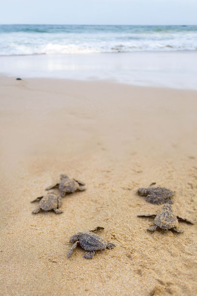 baby_turtles